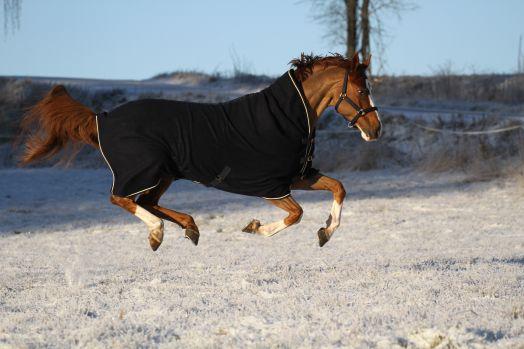 """Шерстяная попона  с полной шеей """"Horse Comfort LUX"""" плотность 820 гр/м"""