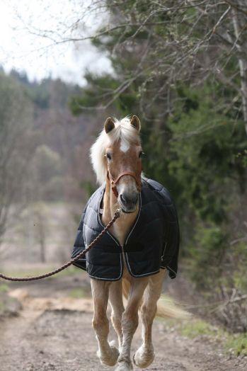 """Непромокаемая попона с капором """"Horse Comfort"""" 3 в 1. Аналог """"BUCAS Multi Power"""""""
