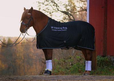 Back on Track для лошади